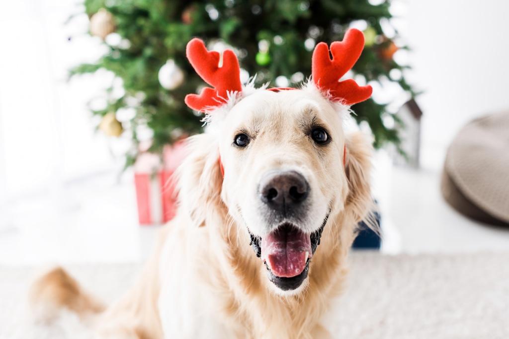 Hunde Adventskalender Welpen
